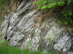 Maerdy mudstone