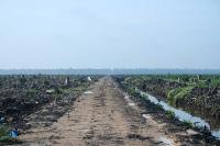 Dad-fforesteiddio eang yn Indonesia er mwyn plannu olew'r balmwydden (Hayden)